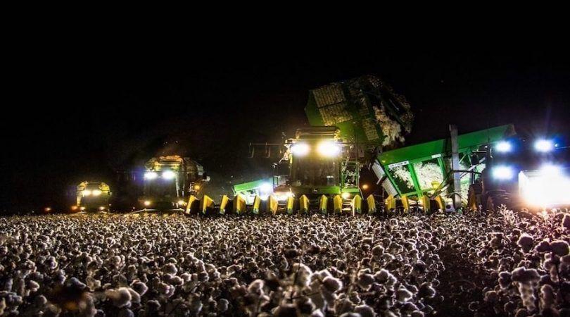 la foto viral de la granja algodon